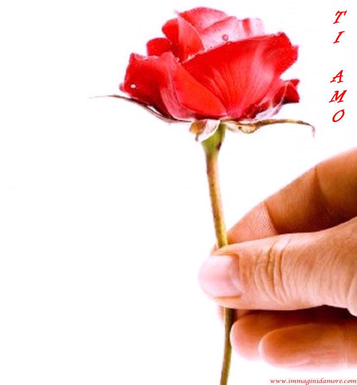 Vasto archivio di immagini amore bellissime tutte da for Foto di rose bellissime