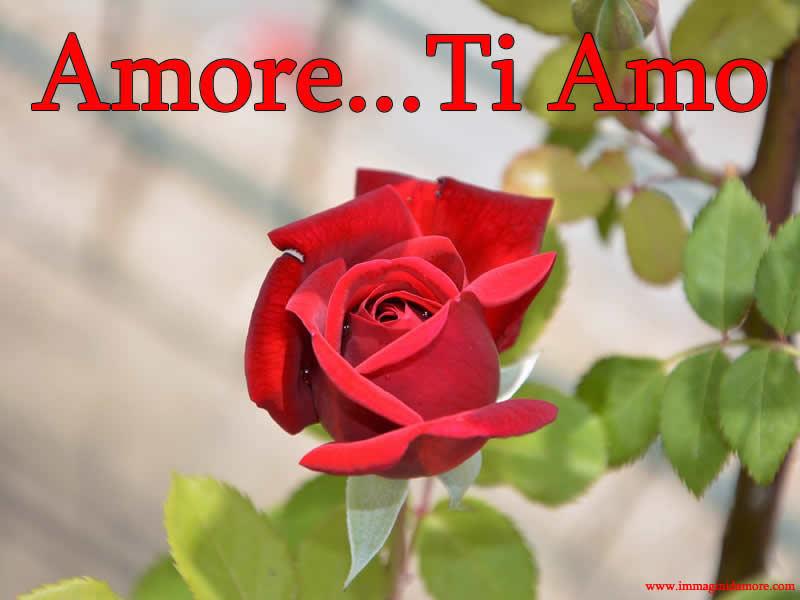 Immagini d 39 amore gratis le pi belle immagini d 39 amore for Immagini natalizie d amore